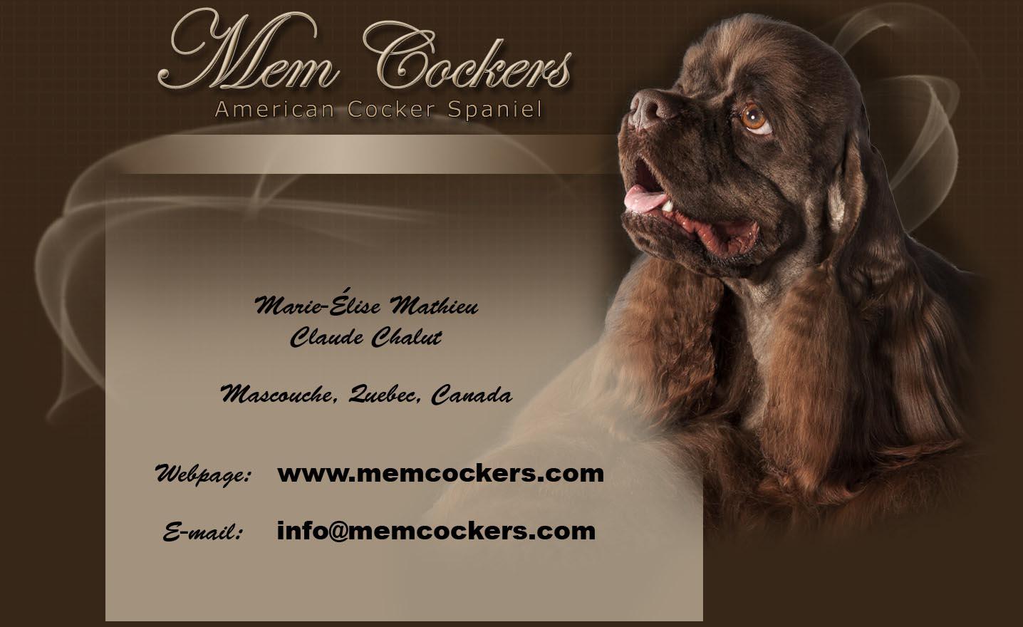 Cockerspaniel Online Magazine Breeders Quebec Canada